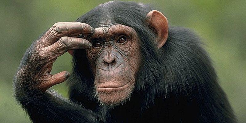 Шимпанзе  | Шнобелевская премия 2018
