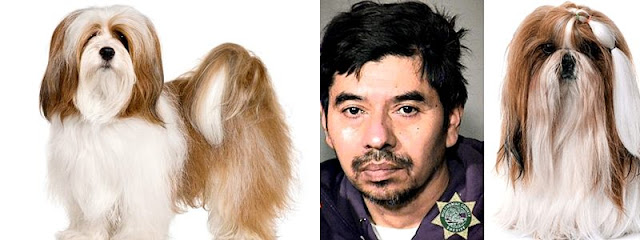 Man who raped his dog