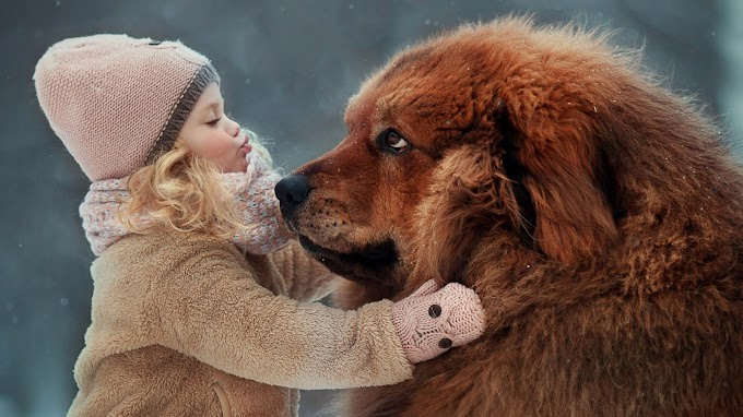 Cute Baby Girl Is Wearing Light Brown Woolen Dress And Cap Standing Near Big Dog In Snowy Background Hd Cute Wallpaper