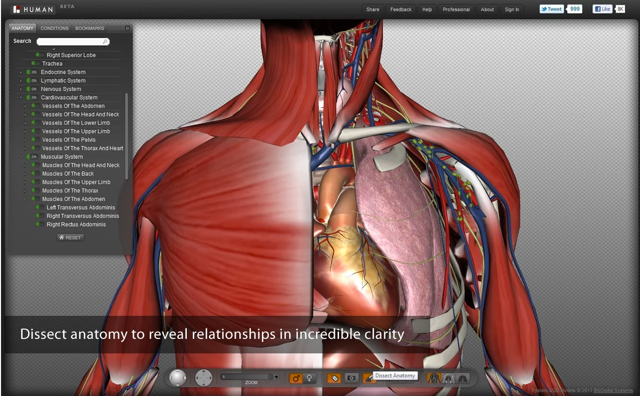anatomy physiology revealed anatomy and physiology of normal  adam interactive anatomy online images