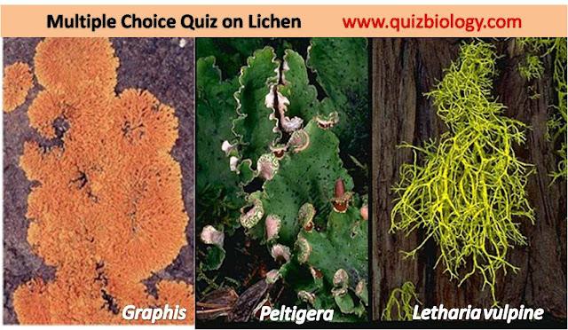 lichen fungi algae relationship quiz