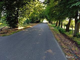 Droga zacieniona drzewami. W głębi fragment po wycince