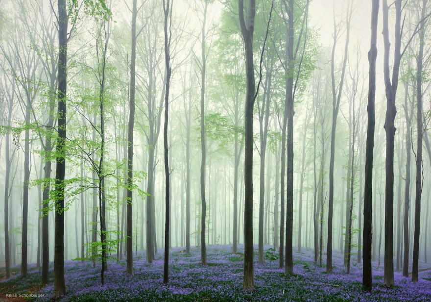 16. Hallerbos, Belgium - 22 Mysterious Forests I'd Love To Get Lost In