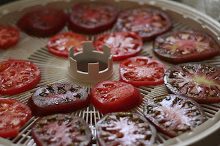 dehydrating (the last of the?) tomatoes