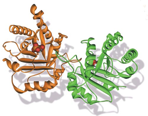 World of Biochemistry (blog about biochemistry): Glycolysis (enzymes of the preparatory phase)