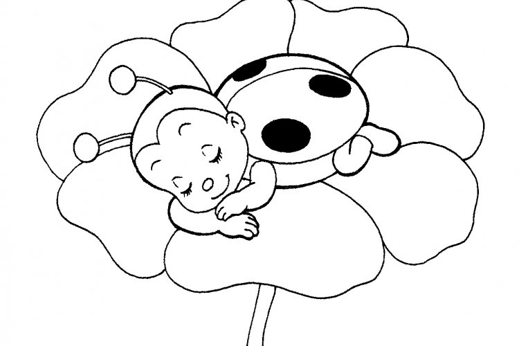 coloring pages of ladybugs 11 printable ladybug coloring pages for free