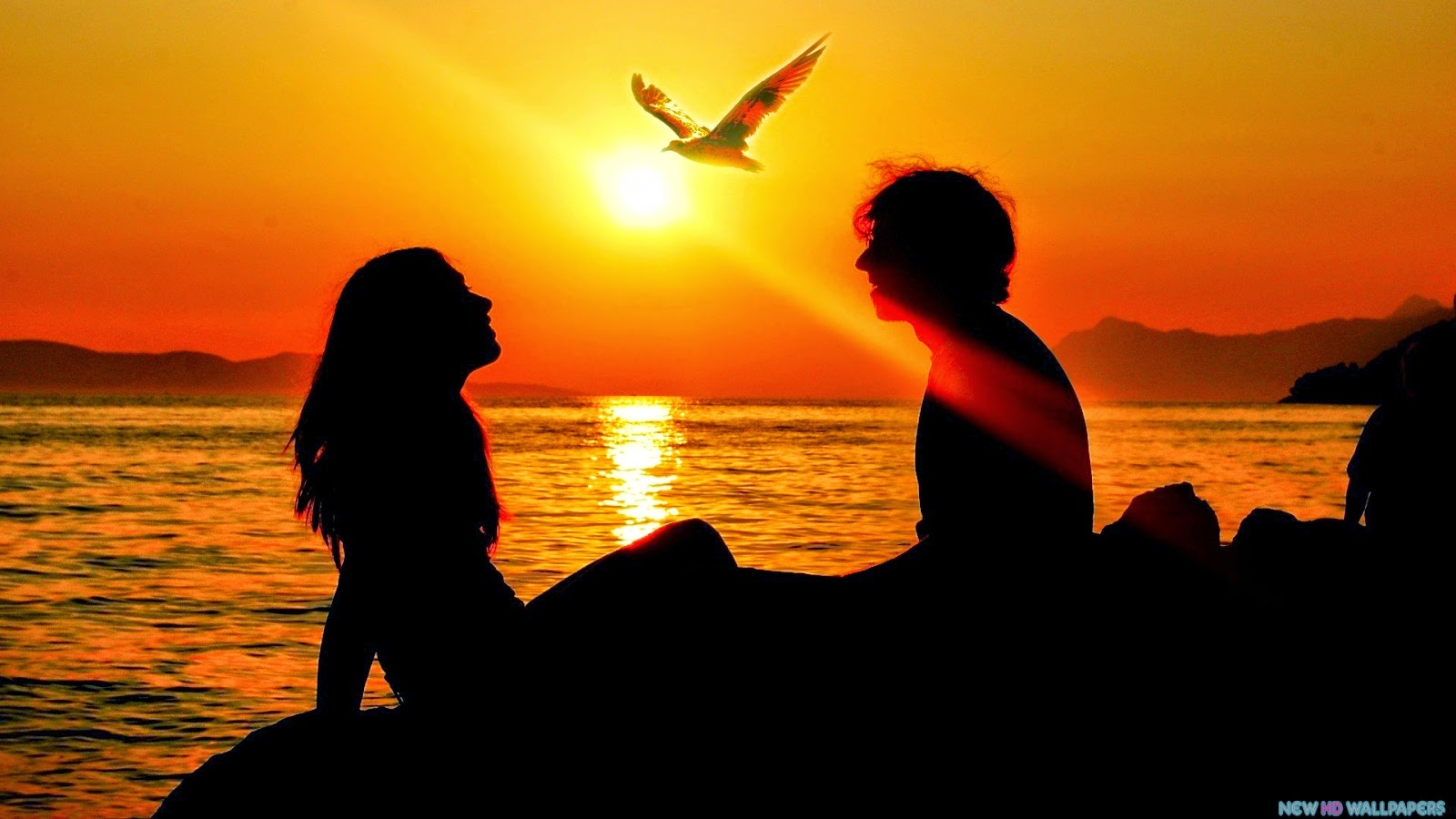 Lover Bird Couple HD Wallpapers Beautiful Background Images