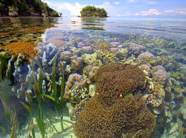 Coral-Triangle togean