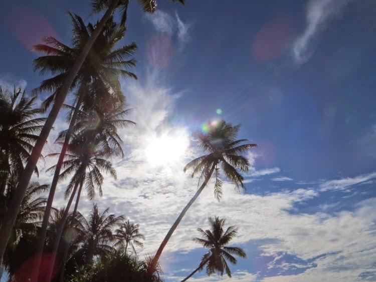 Пальмы и солнце Таиланда