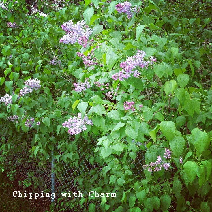 Chipping with Charm: SunShine...http://www.chippingwithcharm.blogspot.com/