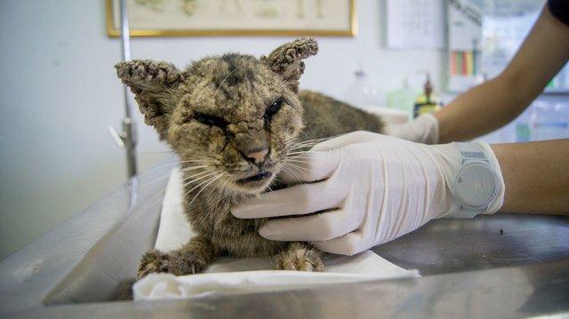 قطة مريضة بمرض الاكتئاب للغاية لاتستطيع التحرك شاهد قصتها و ماطا فعل بها الأطباء
