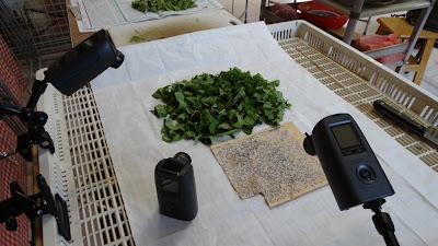泉明蠶業農場-蠶絲蛋白生產履歷縮時攝影工程