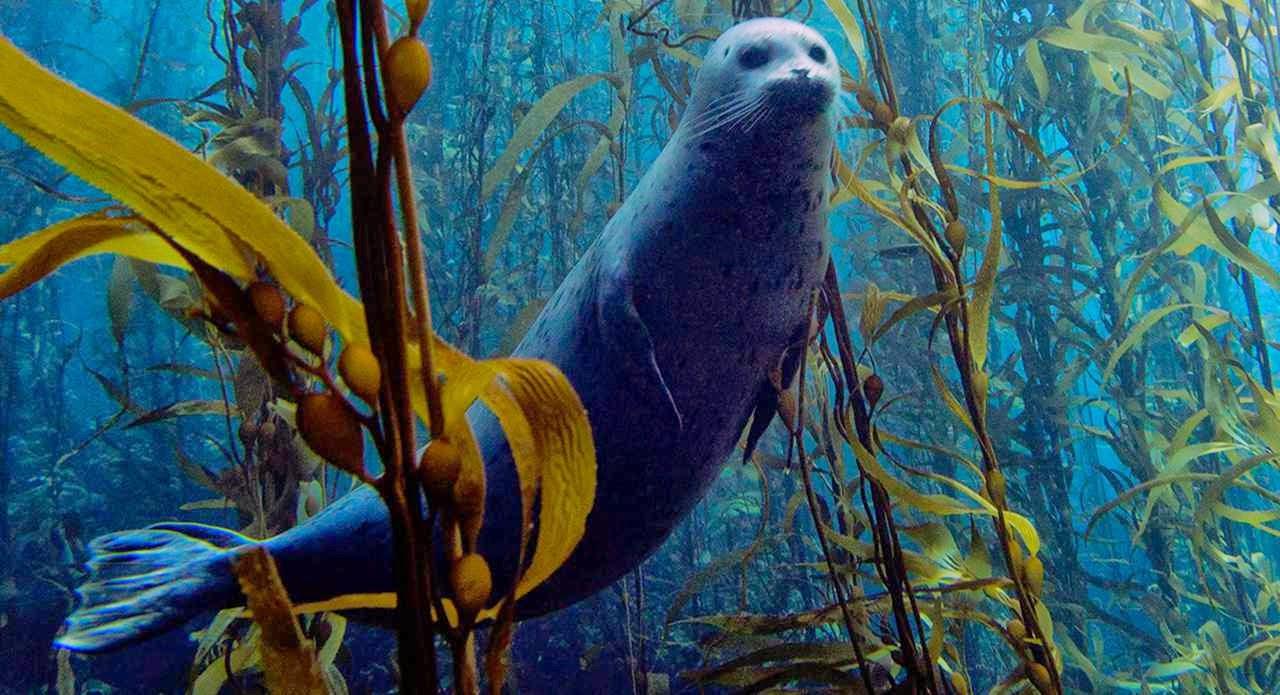 Mar de algas, foca y biologia