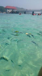taman laut