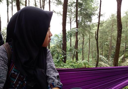 Wisata Hutan Pinus Di Desa Darmacaang