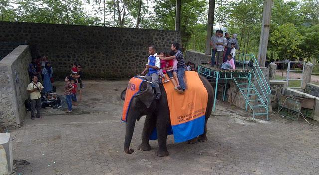 Gajah Linggoasri