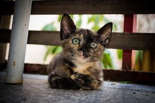 Cara Mengobati Kucing Keracunan Secara Alami