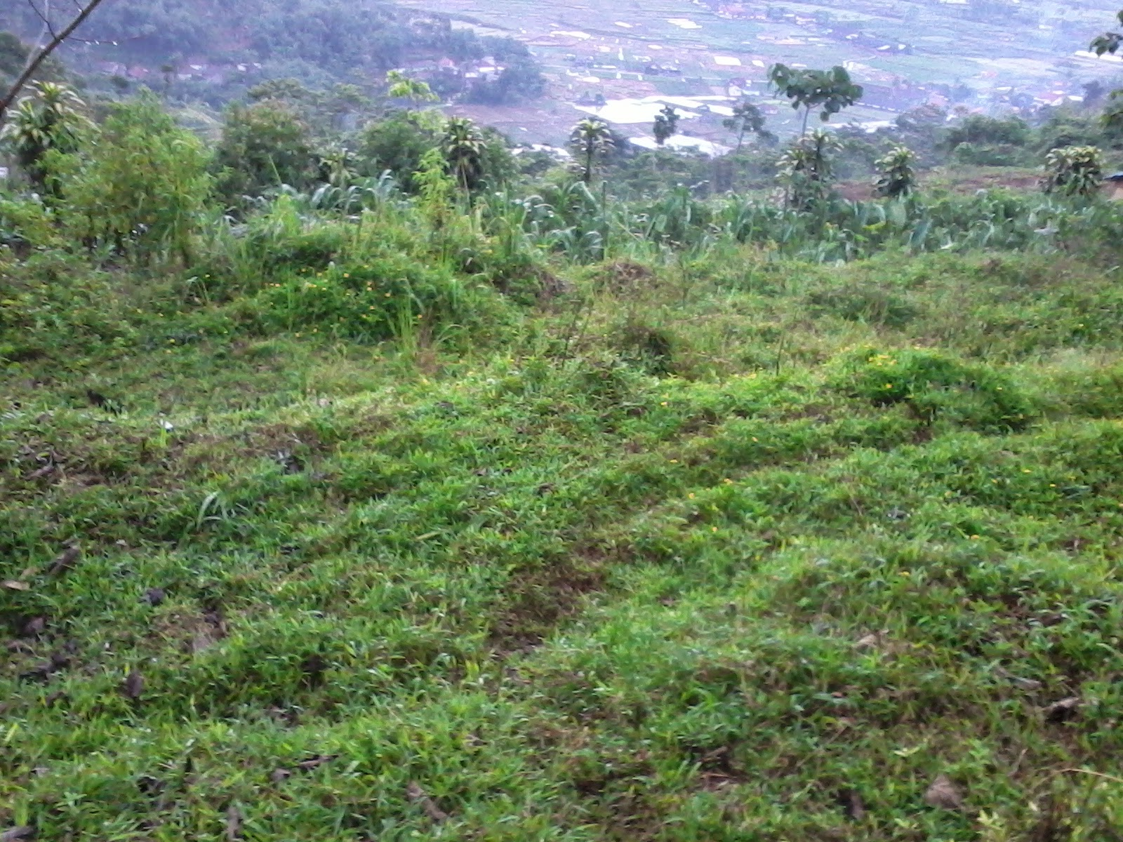 Foto-0245 Jual Tanah luas 4,4 Ha, Ketinggian 1000 m2 Jual tanah di cipanas jual tanah di puncak