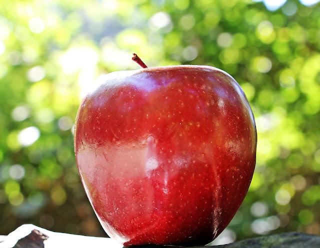 apple, fruit, green apple, red apple