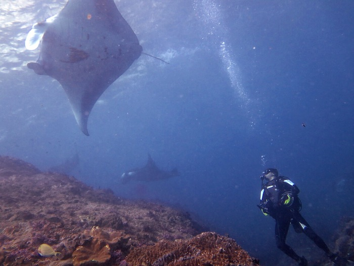 "<a href=""http://mataram.info/things-to-do-in-bali/visitindonesia-banda-marine-life-the-paradise-of-diving-topographic-point-inward-fundamental-maluku/"">Indonesia</a>best destinations : Inward The Essence Of Manta's Party: Manta Point, Nusa Penida"