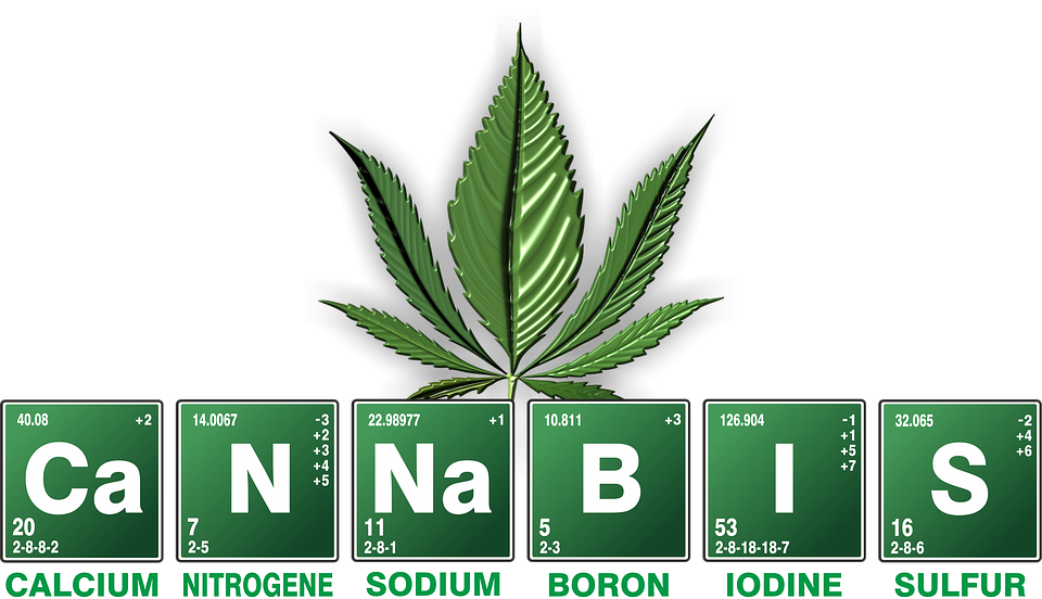 A Writer's Review: CBD Oil and Flower: Natural Alternatives