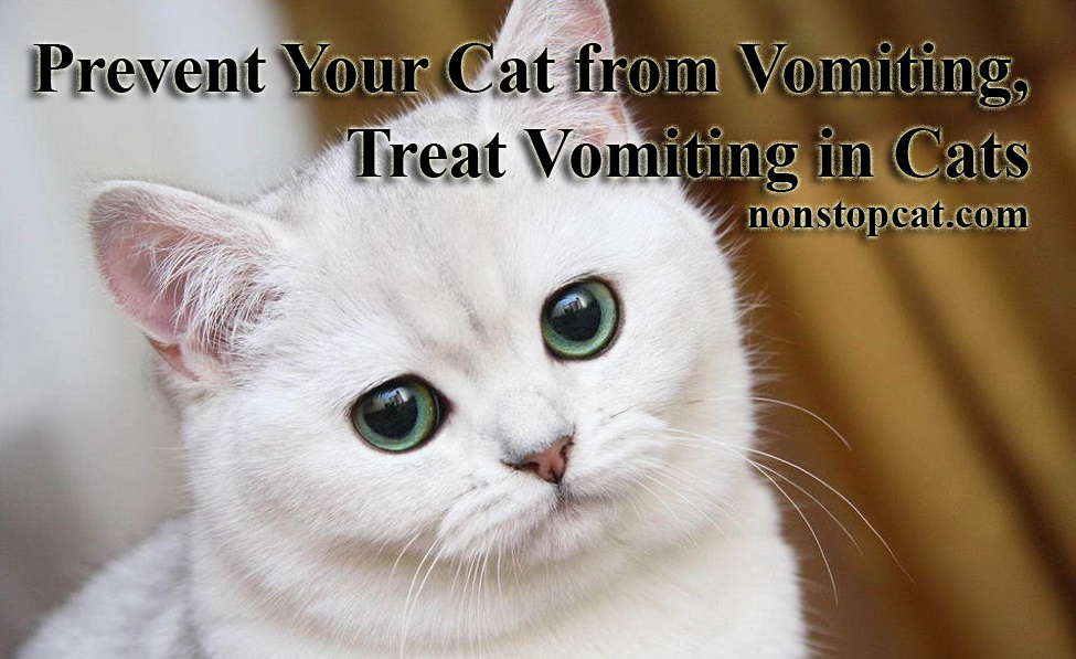 Prevent Your Cat from Vomiting, Treat Vomiting in Cats