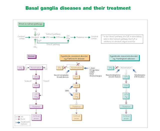 Basal Ganglia Diseases And Their Treatment, Antiparkinsonian drugs, Dopamine agonists, Surgical therapies, Huntington's disease, Other disorders of the basal ganglia