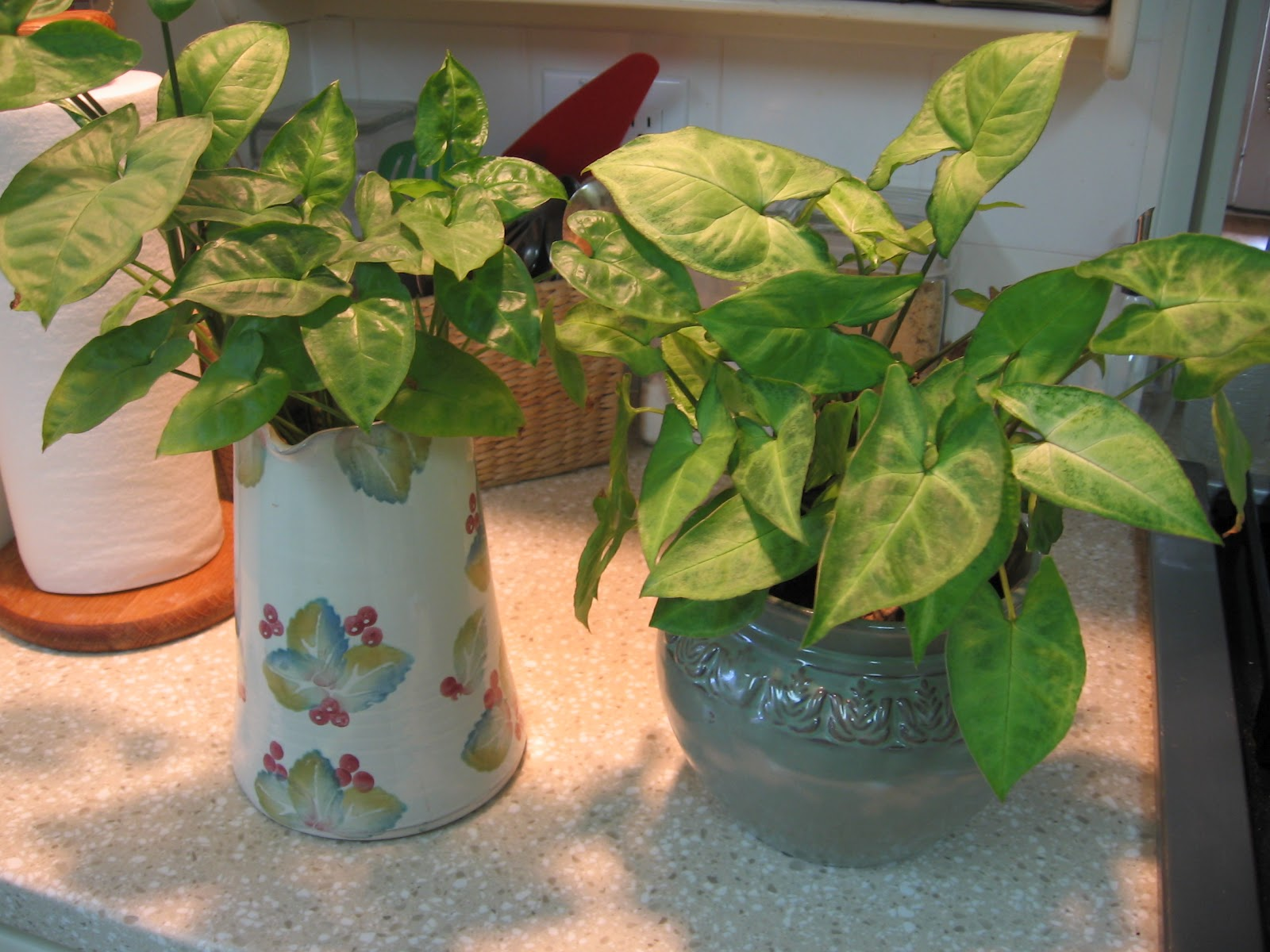 Growing House Plants In Water