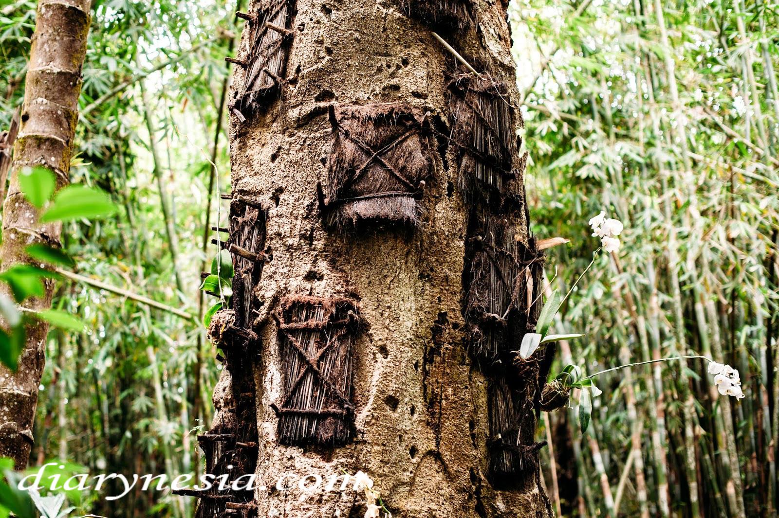kambira baby grave, toraja tourism, traditional burial site kambira village, diarynesia