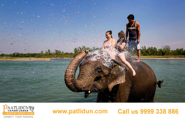Elephant Bath In Jim Corbett Luxury Resorts