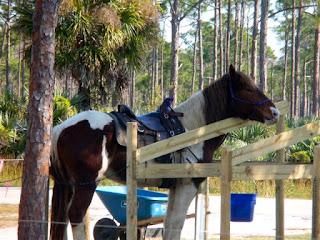 Horseback Riding at Jonathan Dickinson Park in Florida