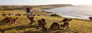 Pulau Kanguru