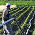 Ενίσχυση 241 εκατ. ευρώ για την εγκατάσταση 12.000 νέων αγροτών- Τι περιλαμβάνει η προκήρυξη