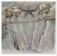 dongeng dua ekor kambing