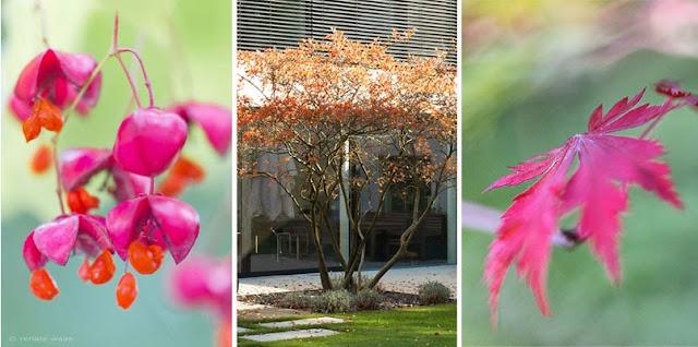 Pflanzplanung, Gehölze, Stauden, Immergrüne, Rosen oder Kletterpflanzen, Garten bepflanzen