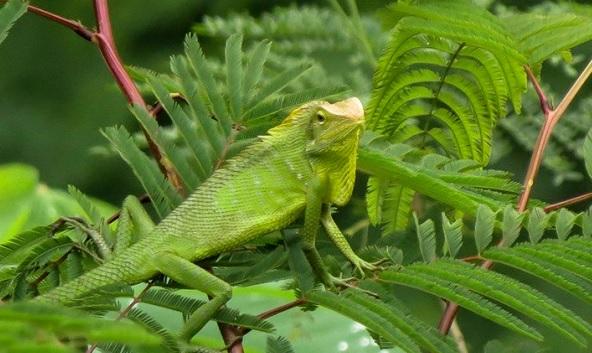 770 Koleksi Gambar Skema Pernapasan Pada Hewan Reptil Terbaru