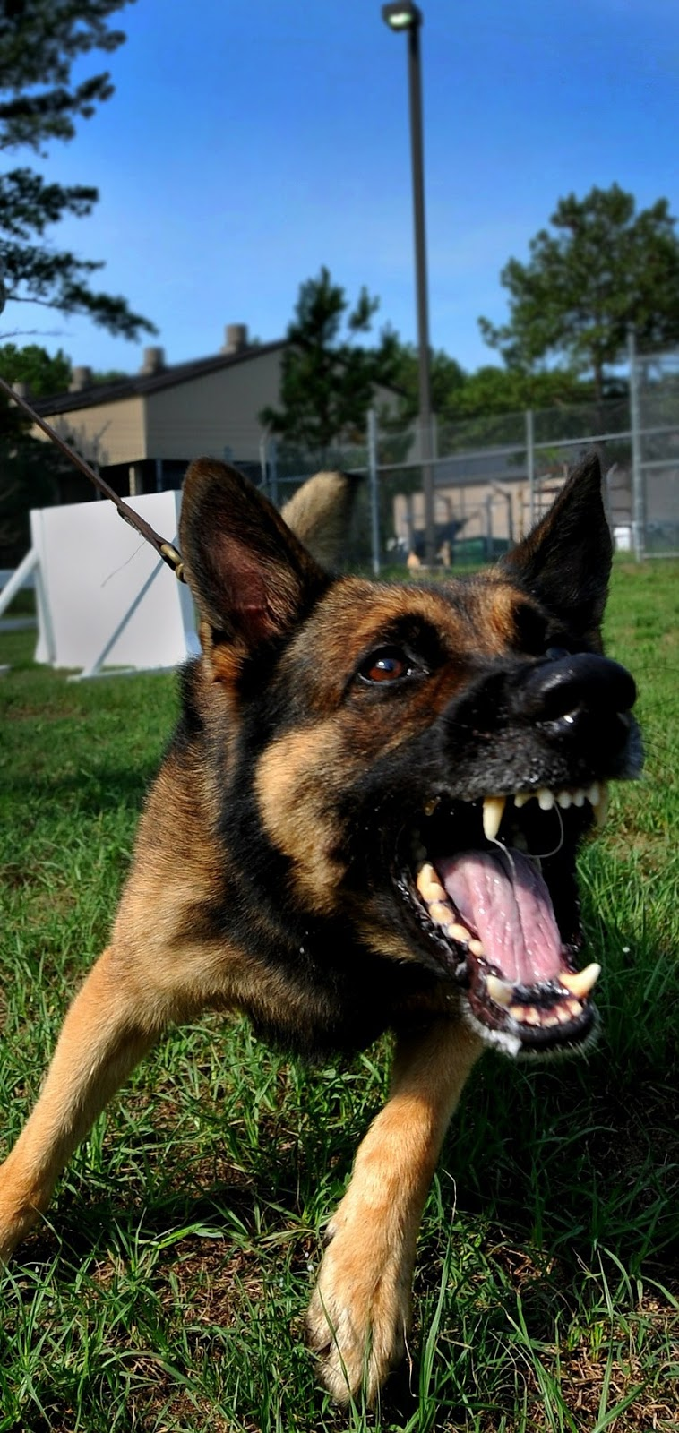 Raged dog.