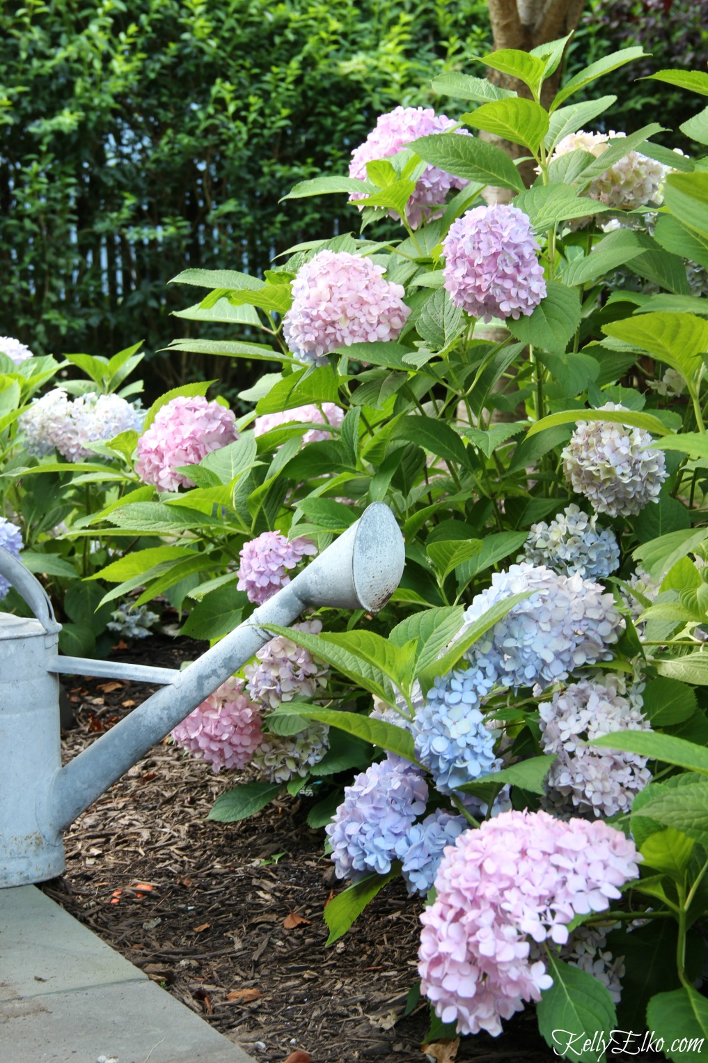 My Five Favorite Gardening Plants Tools And Products Dimples
