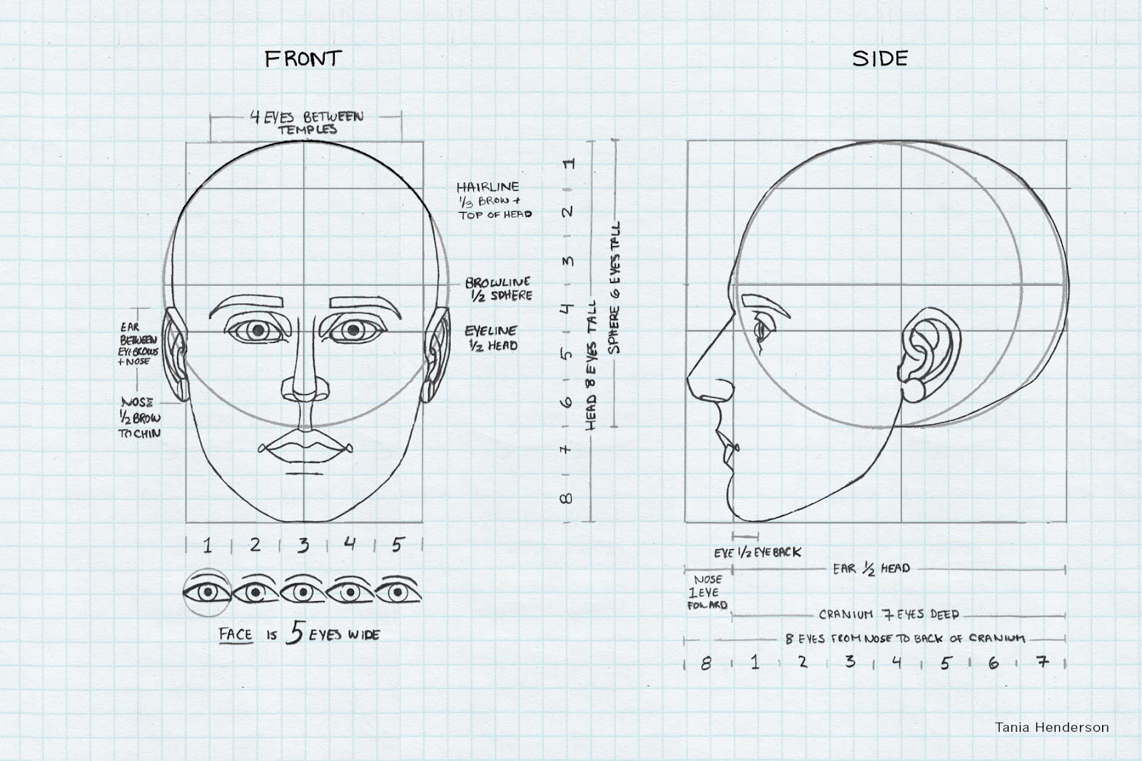 Tania Henderson Head Anatomy Proportion And Design
