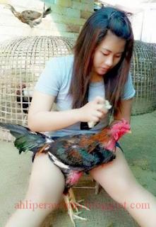 4 Cara mudah Memandikan Ayam Bangkok dengan Baik dan Benar