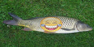 Dam Fish-Jokes Image