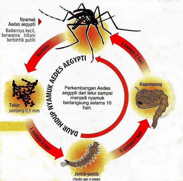 Diet For Dengue Fever Patients