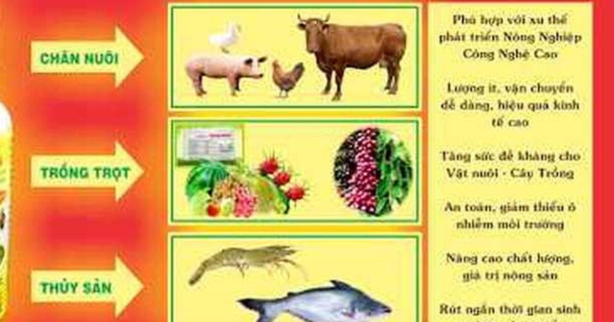 Xử lý chất thải chăn nuôi bằng hầm Biogas (Hệ thống khí sinh học)
