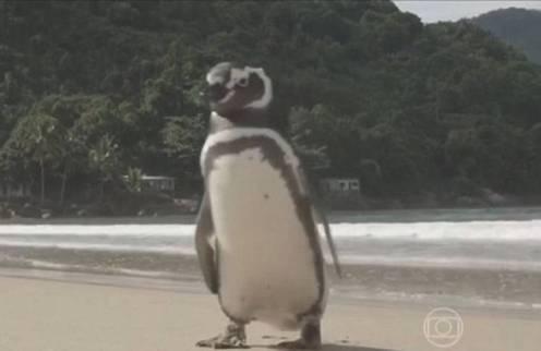 Kisah Dindim sang penguin yang tiap tahun berkunjung pada Joao