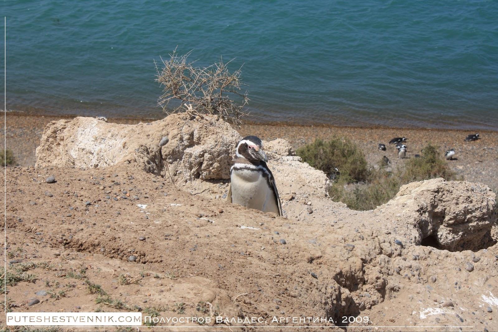 Пингвин на скале