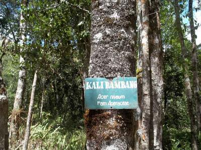 kali bambang,hutan senaru,santri dan alam