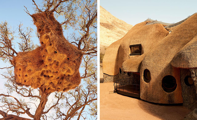 Namibia's Nest-Inspired Lodge Wins Award As Best Private House