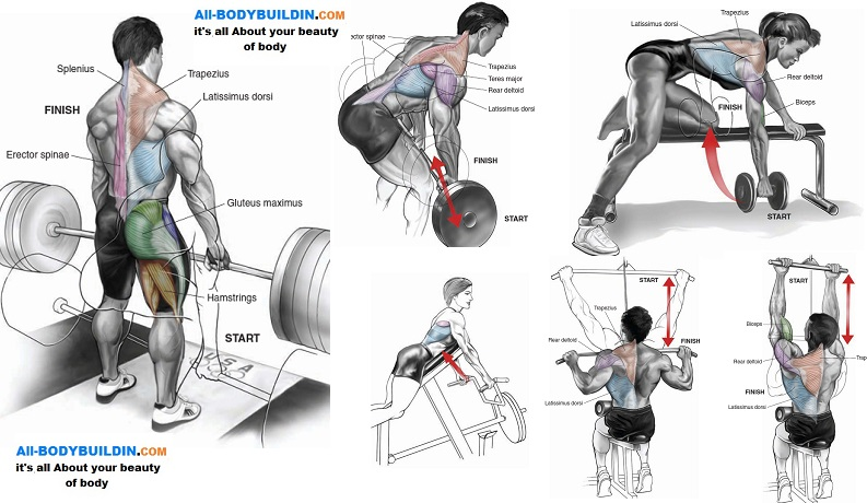 Top muscle building back exercises all bodybuilding