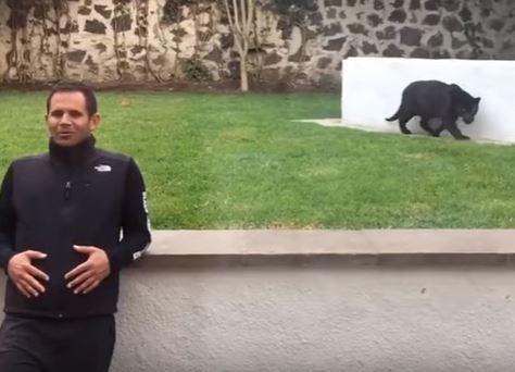 Video del momento en que una pantera salta sobre un hombre