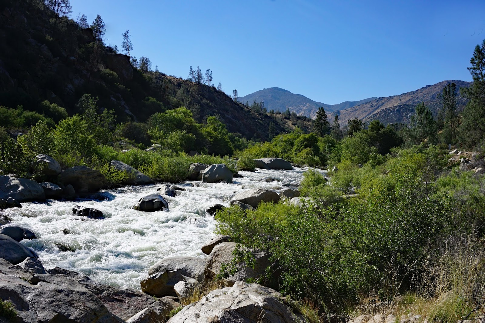 Voyagers on Wheels: California June 2016 Sequoia National Forest
